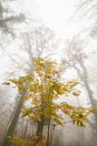 Ομίχλη και υδρονέφωση στο δάσος, με το ζωηρόχρωμο φύλλωμα φθινοπώρου Στοκ Φωτογραφία
