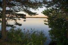 Ομίχλη ξημερωμάτων με την ανατολή πίσω από τα δέντρα στο δάσος Στοκ φωτογραφίες με δικαίωμα ελεύθερης χρήσης
