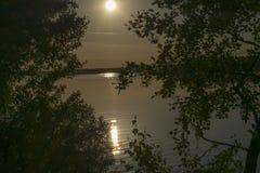 Ομίχλη ξημερωμάτων με την ανατολή πίσω από τα δέντρα στο δάσος Στοκ Εικόνες
