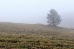 Ομίχλη σε ένα πεδίο φθινοπώρου Στοκ Φωτογραφίες