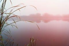 Ομίχλη στα ξημερώματα σε μια μικρή λίμνη στοκ φωτογραφίες