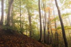 Ομίχλη στην κοιλάδα στα βουνά Στοκ Φωτογραφίες