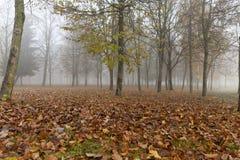 Ομίχλη στο δάσος φθινοπώρου Στοκ εικόνα με δικαίωμα ελεύθερης χρήσης