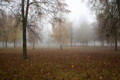 Ομίχλη στο δάσος φθινοπώρου Στοκ εικόνες με δικαίωμα ελεύθερης χρήσης