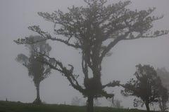 Ομίχλη στο ηφαίστειο Poas Κόστα Ρίκα, επαρχία Alajuela, ηφαίστειο Poas Στοκ Εικόνες