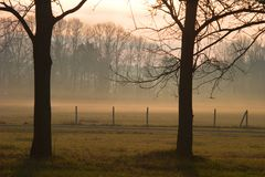 Ομίχλη της Misty στα ξύλα μια βροχερή ημέρα