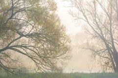 Ομίχλη φθινοπώρου στο μικτό δάσος Στοκ Εικόνες
