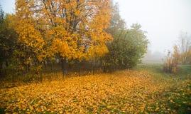 Ομίχλη φθινοπώρου στο πάρκο Στοκ Φωτογραφίες