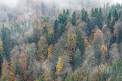 Ομίχλη φθινοπώρου Στοκ Εικόνα