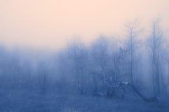 ομίχλη χρώματος Στοκ Εικόνες