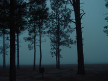 ομίχλη στοκ φωτογραφίες με δικαίωμα ελεύθερης χρήσης