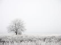 ομίχλη Στοκ εικόνα με δικαίωμα ελεύθερης χρήσης