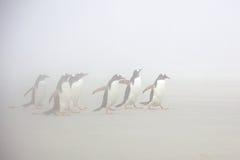 ομίχλη penguins Στοκ Φωτογραφίες