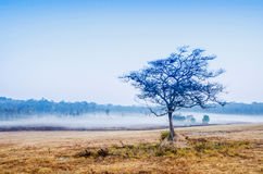Ομίχλη και δέντρα Στοκ φωτογραφία με δικαίωμα ελεύθερης χρήσης