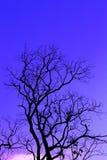 Ομίχλη και δέντρο πρωινού Στοκ Φωτογραφίες