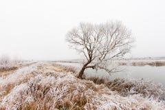Ομίχλη και παγετός στον ποταμό Στοκ φωτογραφίες με δικαίωμα ελεύθερης χρήσης