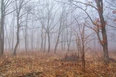 Ομίχλη μεταξύ των δέντρων Στοκ Φωτογραφίες