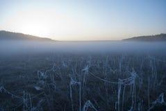 Ομίχλη ξημερωμάτων, παγετός στον τομέα, στις πράσινες εγκαταστάσεις, υπόβαθρο άνοιξη και, ιστοί αράχνης Στοκ Εικόνες