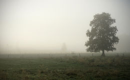 Ομίχλη ξημερωμάτων στοκ εικόνες με δικαίωμα ελεύθερης χρήσης