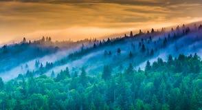 Ομίχλη πέρα από τα δέντρα πεύκων στην ανατολή, που βλέπει από το δικαστήριο του διαβόλου, ΝΕ Στοκ εικόνα με δικαίωμα ελεύθερης χρήσης