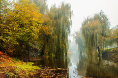 Ομίχλη πέρα από τον ποταμό στο δάσος το φθινόπωρο στοκ εικόνα