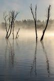 Ομίχλη πέρα από το νεκρό δέντρο στο δέλτα Στοκ Εικόνες