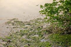 Ομίχλη πέρα από το νερό Στοκ Φωτογραφίες