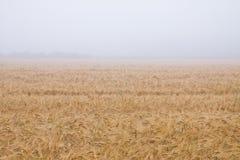 ομίχλη πεδίων Στοκ φωτογραφία με δικαίωμα ελεύθερης χρήσης