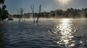 Ομίχλη πρωινού στο δέλτα Δούναβη Στοκ Εικόνα