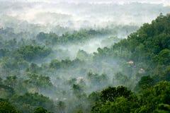Ομίχλη πρωινού Στοκ εικόνα με δικαίωμα ελεύθερης χρήσης