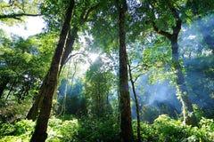 Ομίχλη σε ένα δάσος Στοκ Φωτογραφίες