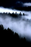 Ομίχλη στα δέντρα στοκ φωτογραφία