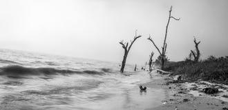 Ομίχλη στην παραλία Everglades Στοκ φωτογραφίες με δικαίωμα ελεύθερης χρήσης
