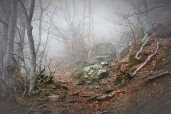 Ομίχλη στο δάσος οξιών βουνών Στοκ Φωτογραφίες