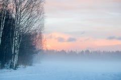 Ομίχλη στο δάσος το χειμώνα Στοκ Εικόνα