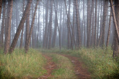 Ομίχλη στο δάσος Στοκ Εικόνα