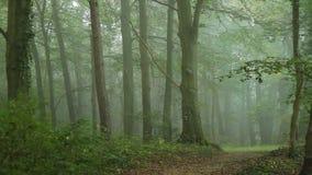 Ομίχλη στο δάσος απόθεμα βίντεο