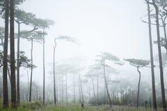 Ομίχλη στο δάσος Στοκ Εικόνες