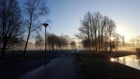 Ομίχλη στο πάρκο Στοκ Εικόνα
