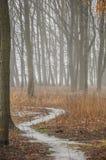 Ομίχλη στο παλαιό πάρκο Στοκ εικόνα με δικαίωμα ελεύθερης χρήσης