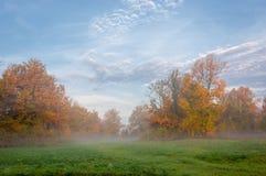 Ομίχλη φθινοπώρου στο μικτό δάσος Στοκ εικόνα με δικαίωμα ελεύθερης χρήσης