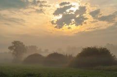 Ομίχλη φθινοπώρου στο μικτό δάσος Στοκ Φωτογραφία