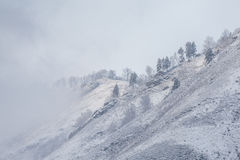Ομίχλη χιονιού Στοκ Φωτογραφία