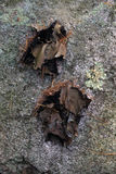 Ομαλό Tripe βράχου στοκ φωτογραφία με δικαίωμα ελεύθερης χρήσης