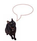 ομιλία γατών Στοκ φωτογραφία με δικαίωμα ελεύθερης χρήσης