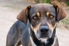 ομιλία ματιάς σκυλιών Στοκ φωτογραφία με δικαίωμα ελεύθερης χρήσης