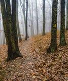 Ομιχλώδες ίχνος πεζοπορίας στα βουνά της Βιρτζίνια, ΗΠΑ στοκ φωτογραφία με δικαίωμα ελεύθερης χρήσης