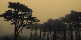 Ομιχλώδες ασβέστιο του Σαν Φρανσίσκο ηλιοβασιλέματος Στοκ Εικόνα