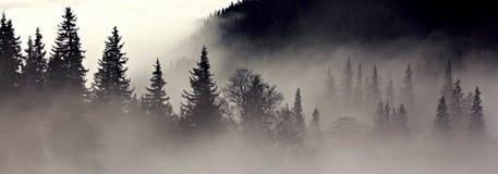 ομιχλώδες δάσος κατάθλιψης Στοκ εικόνα με δικαίωμα ελεύθερης χρήσης