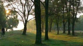 Ομιχλώδες δάσος πάρκων πρωινού φιλμ μικρού μήκους